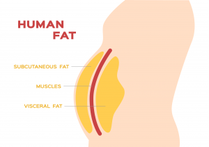Belly Fat Image